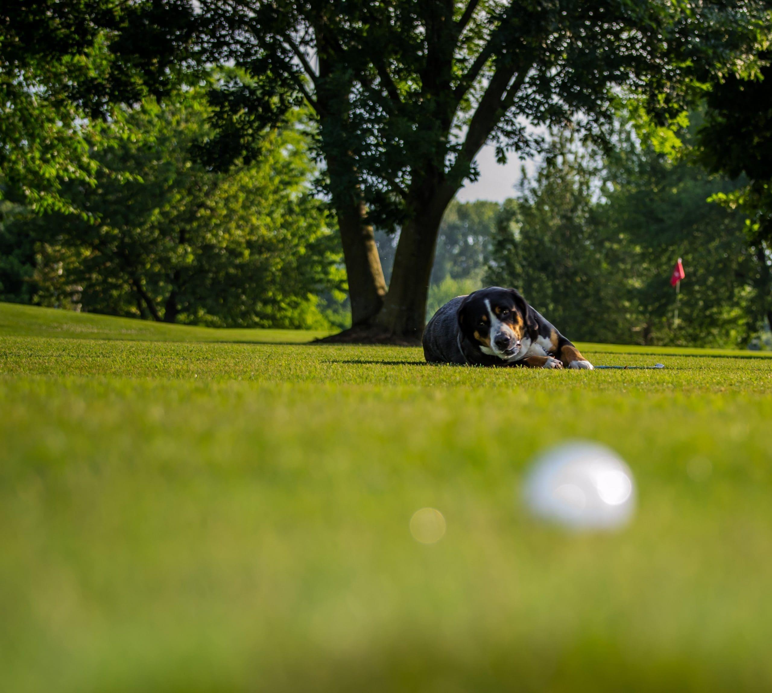 00-Golf_Udine©archivio-Villaverde-Resort